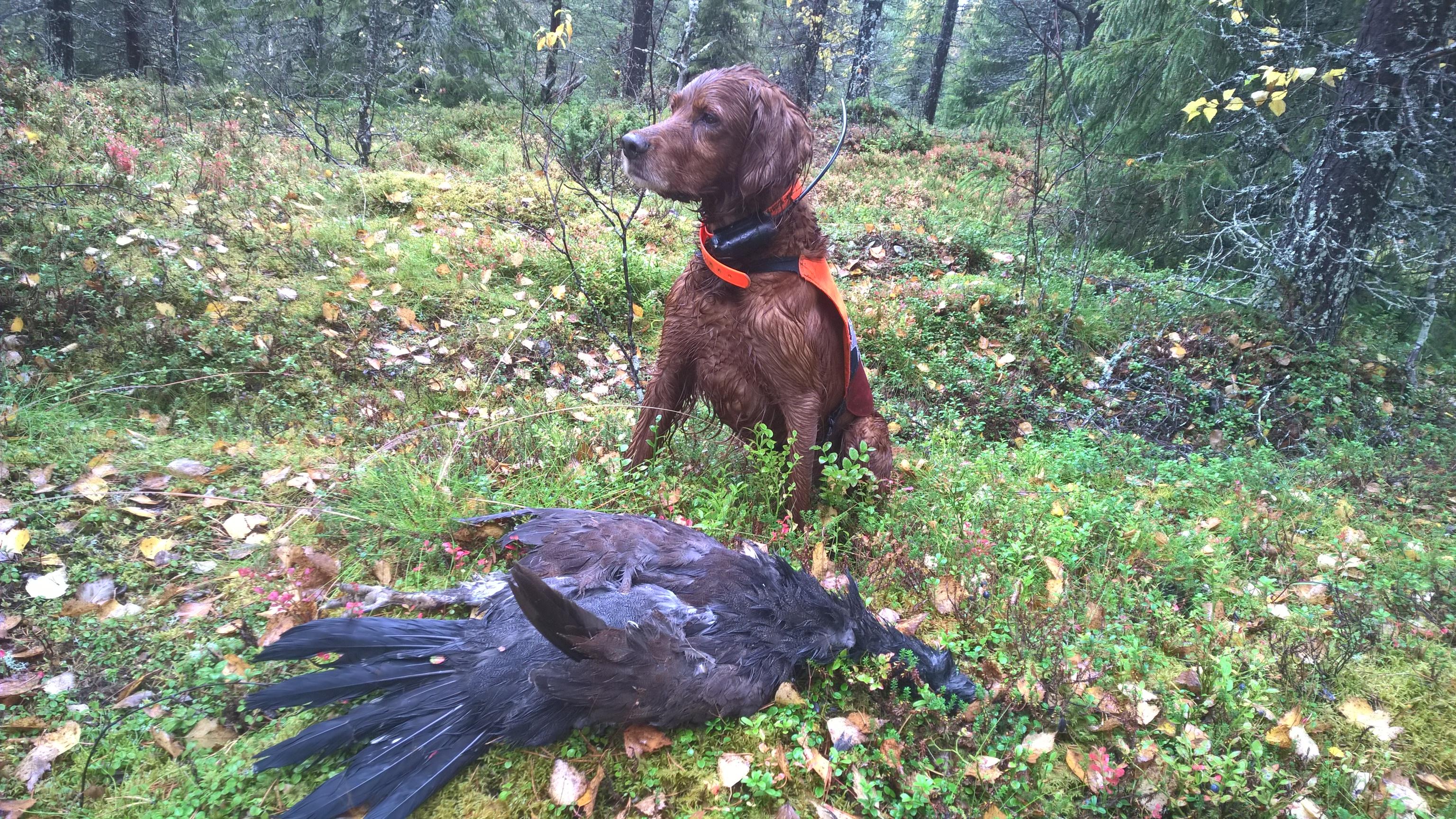 pienriistan metsästys
